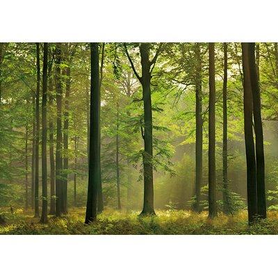 NEXT! BY REINDERS Herbst Wald 2.54m L x 366cm W Roll Wallpaper