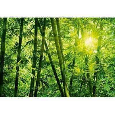 NEXT! BY REINDERS Bambus Wald 2.54m L x 366cm W Roll Wallpaper