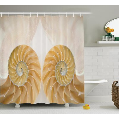 """Inside Out Seashell Shower Curtain Size: 69"""" H x 75"""" W"""