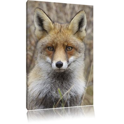 Pixxprint Fox in Branches Photographic Print on Canvas