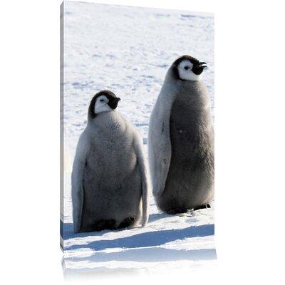 Pixxprint Penguin Chick Photographic Print on Canvas