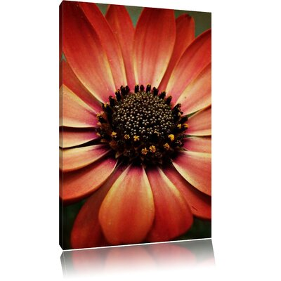 Pixxprint Graceful Marguerite Photographic Print on Canvas