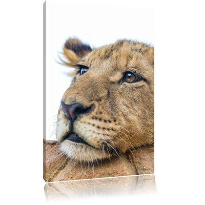Pixxprint Nodding Young Lion Photographic Print on Canvas