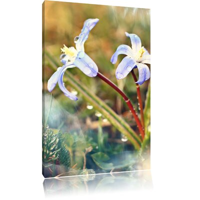Pixxprint Lilac Forest Flower in the Morning Dew Photographic Print on Canvas