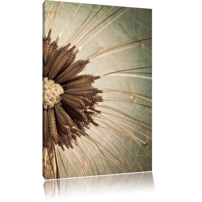 Pixxprint Close-Up Dried Dandelion Flower Photographic Print on Canvas