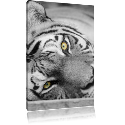 Pixxprint Exhausted Tiger Black and White Photographic Print on Canvas