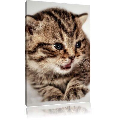 Pixxprint Kitty on Blanket Photographic Print on Canvas