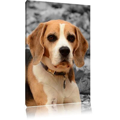 Pixxprint Beagle Puppy Playing in Leaves Black and White Photographic Print on Canvas