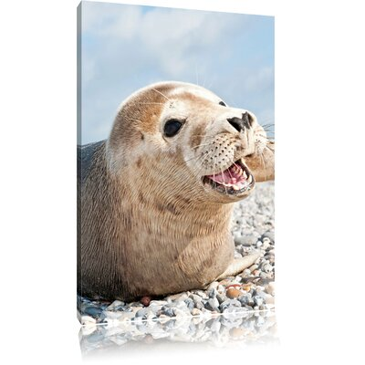 Pixxprint Beautiful White Seal on Rocky Beach Photographic Print on Canvas