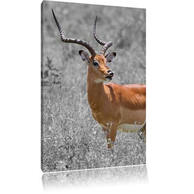 Pixxprint Magnificent Dorcas Gazelle in Wild Grass Black and White Photographic Print on Canvas