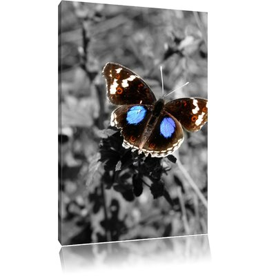 Pixxprint Beautiful Butterfly on Blade of Grass Black and White Photographic Print on Canvas