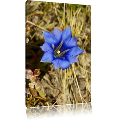 Pixxprint Blue Blossom Photographic Print on Canvas