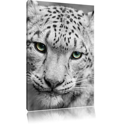 Pixxprint Beautiful Snow Leopard Black and White Photographic Print on Canvas