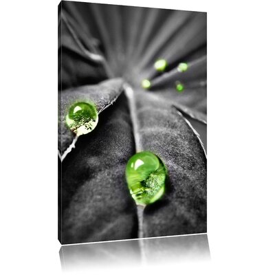 Pixxprint Plant with Dew Drop Photographic Print on Canvas