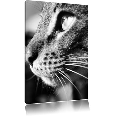 Pixxprint Side View of Cat Photographic Print on Canvas