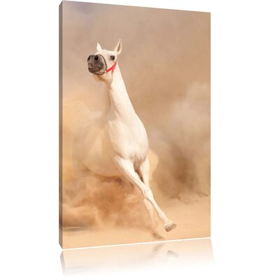 Pixxprint Proud White Horse in the Desert Photographic Print on Canvas
