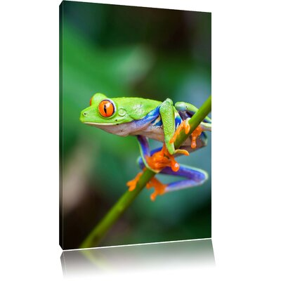 Pixxprint Tiny Exotic Frog on Green Branch Photographic Print on Canvas