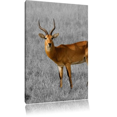 Pixxprint Young Dorcas Gazelle in Dry Grass Black and White Photographic Print on Canvas