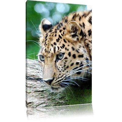 Pixxprint Young Leopard Photographic Print on Canvas