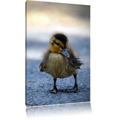 Pixxprint Duckling in the Road Photographic Print on Canvas