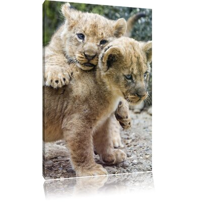Pixxprint Beautiful Tiny Lion Cubs at Play Photographic Print on Canvas
