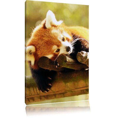 Pixxprint Little Dreaming Red Panda Photographic Print on Canvas