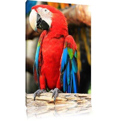Pixxprint Funny Colourful Parrot Couple Photographic Print on Canvas