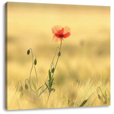 Pixxprint Red Flowers in Field Photographic Print on Canvas