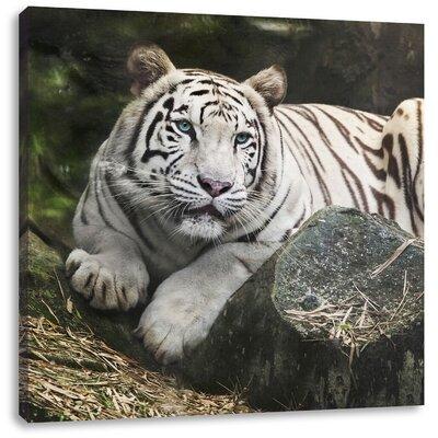 Pixxprint White Tiger Photographic Print on Canvas