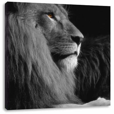 Pixxprint Magnificent Proud Lion Photographic Print on Canvas