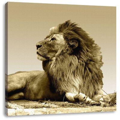 Pixxprint Resting Lion Photographic Print on Canvas