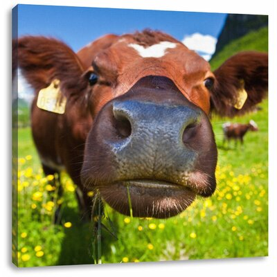 Pixxprint Curious Alpine Cow on Pasture Photographic Print on Canvas