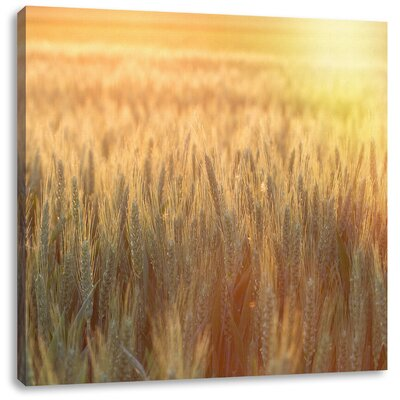 Pixxprint Cornfield at Sunset Photographic Print on Canvas
