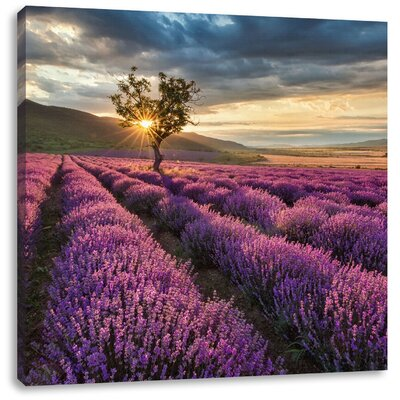 Pixxprint Lonesome Tree in Luxurious Lavender Field Photographic Print on Canvas
