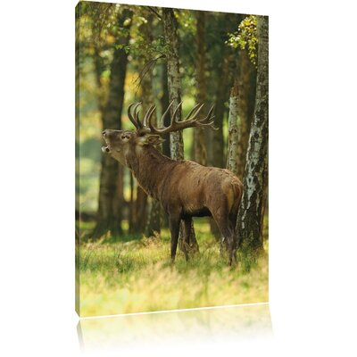 Pixxprint Deer in Woods Photographic Print on Canvas