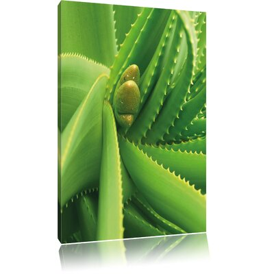 Pixxprint Green Plant with Water Droplets Photographic Print on Canvas