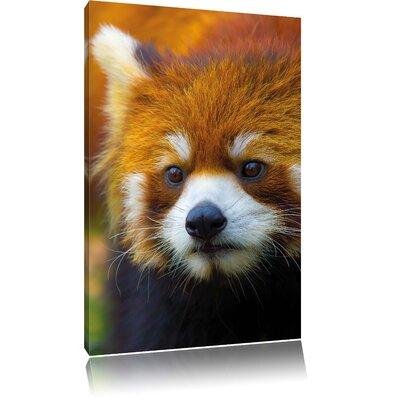 Pixxprint Red Panda Photographic Print on Canvas