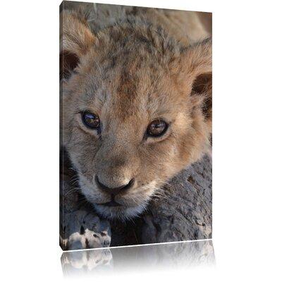 Pixxprint Cute Tiger Cub Photographic Print on Canvas
