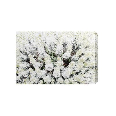 Andrew Lee French Beautifully White by Andrew Lee Graphic Art Wrapped on Canvas