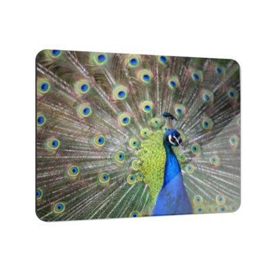 Klebefieber Farbenprächtiger Pfau Coaster Set