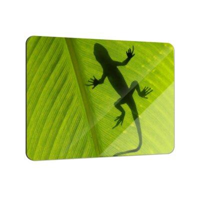 Klebefieber Gecko Schatten Coaster Set