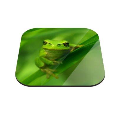 Klebefieber Grimmiger Kleiner Frosch Coaster Set