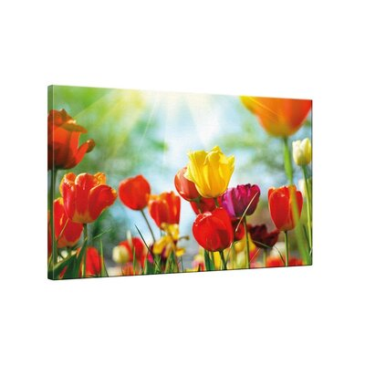 Klebefieber Tulpenwiese Photographic Print on Canvas