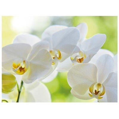 Klebefieber Orchideentraum Glass Art