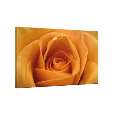 Klebefieber Rose Apricot Photographic Print on Canvas