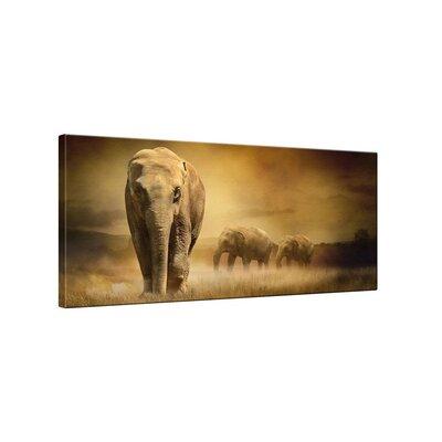 Klebefieber Elefanten Photographic Print on Canvas