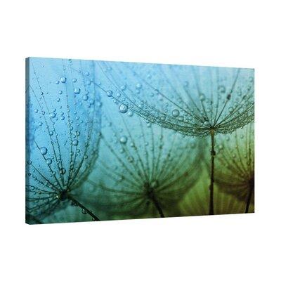 Klebefieber Pusteblume im Regen Photographic Print on Canvas