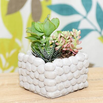 Dingading Piled Pebble Square Terrarium