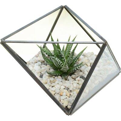Dingading Geometric Terrarium