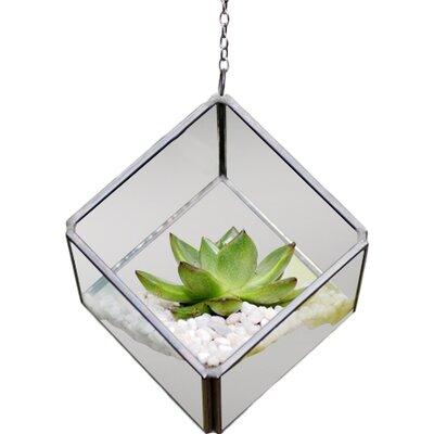 Dingading Cube Hanging Terrarium